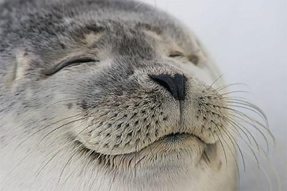 toque mp3 grito foca baixar