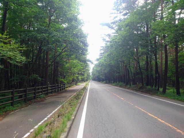 モミ純林 天然記念物