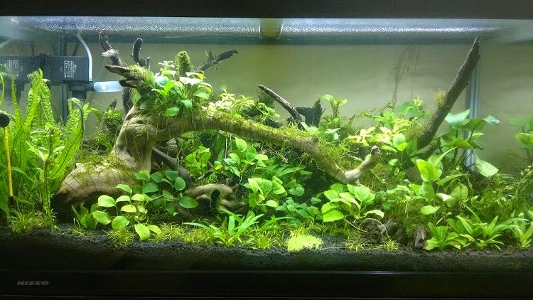 Menghias Aquarium Dengan Seni Aquascape