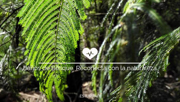 Baños de Bosque. Reconecta con la naturaleza