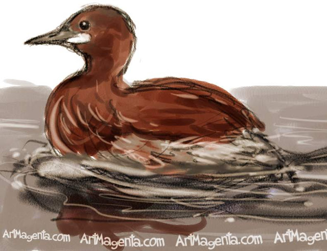 Little Grebe sketch painting. Bird art drawing by illustrator Artmagenta.
