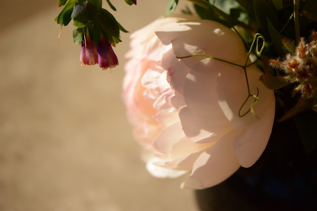 rose, wollerton old hall, cerinthe, major purpurea, monday vase, small sunny garden, IaVoM, cottage garden, amy myers, desert garden