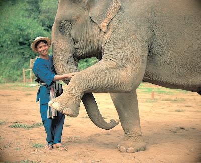 VIDA MADURA - Anantara Golden triangle Resort, relax, confort y elefantes en Asia 3
