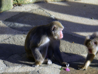 MONKEY GUARDING DUMMY