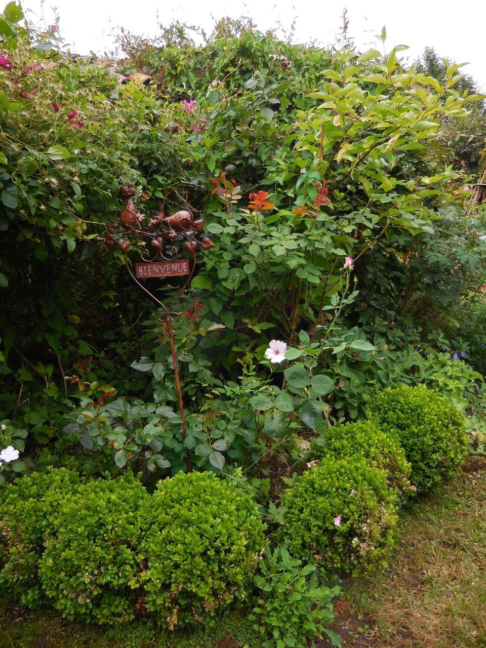 cagouille 39 s garden par quoi vais je remplacer mes buis. Black Bedroom Furniture Sets. Home Design Ideas