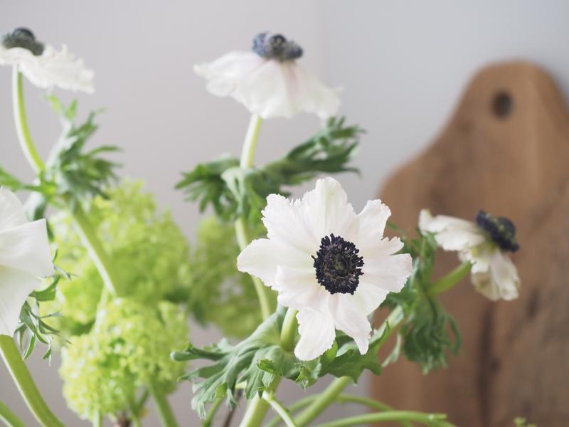 valkoinen anemone