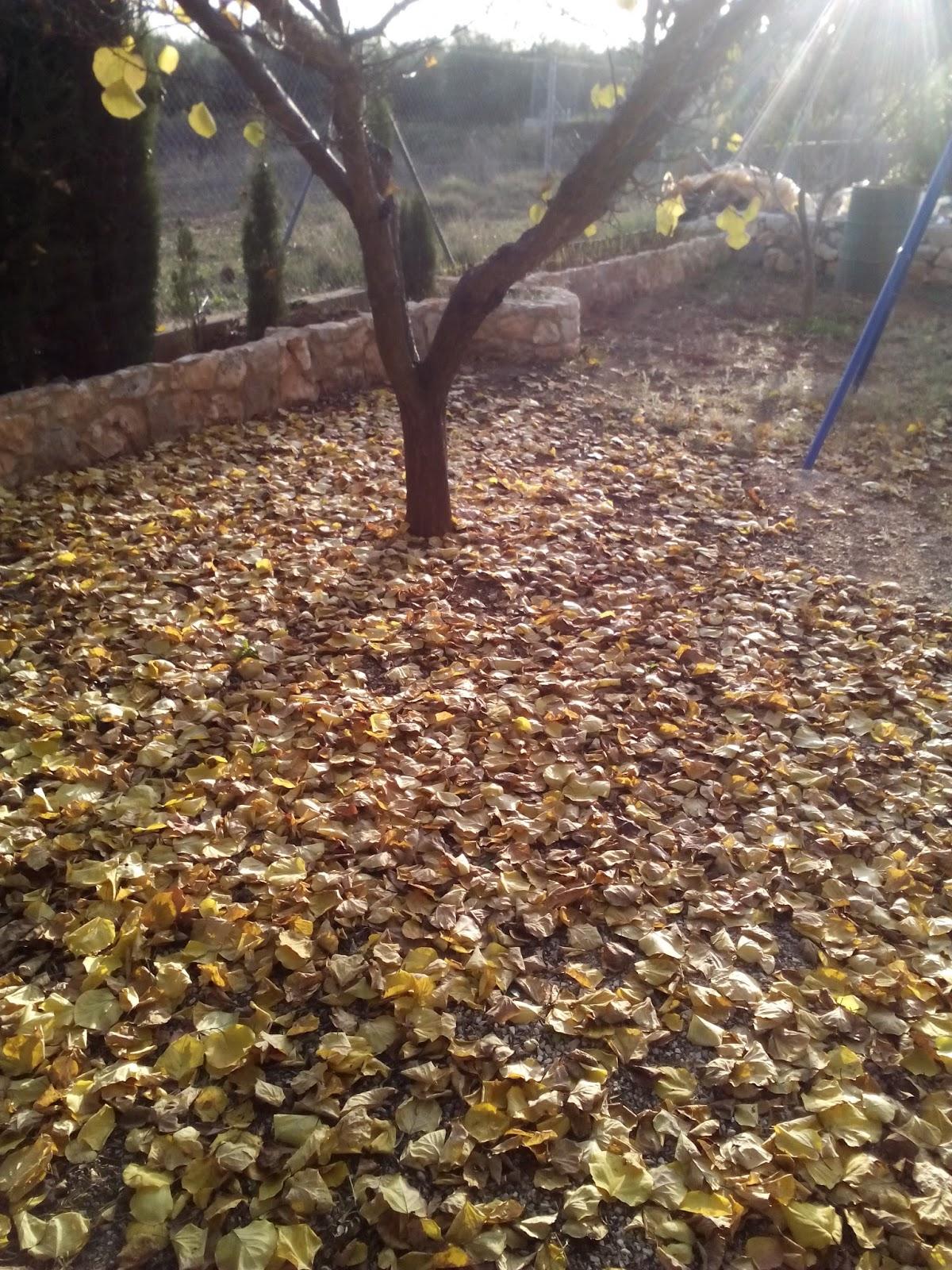 sin hojas