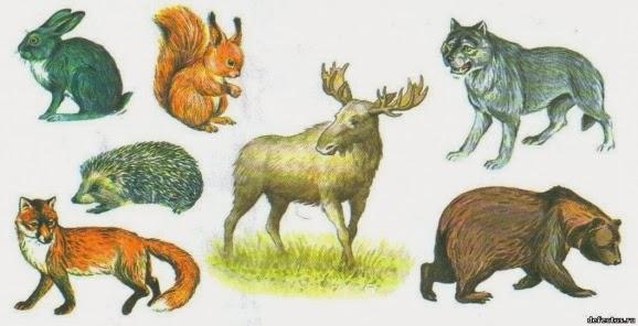 Картинки маленький волчонок