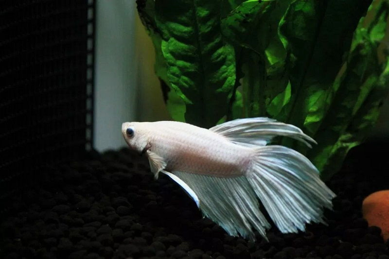 What to Expect From Betta Fish Tank with Filter and Heater