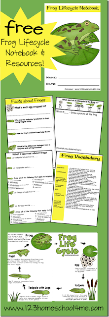FREE Life Cycle of a Frog printable includes chart, vocabulary, facts, and more as kids kindergarten, 1st grade, 2nd grade, 3rd grade, 4th grade and more have a science experiment watching tadpoles become frogs. CUTE!