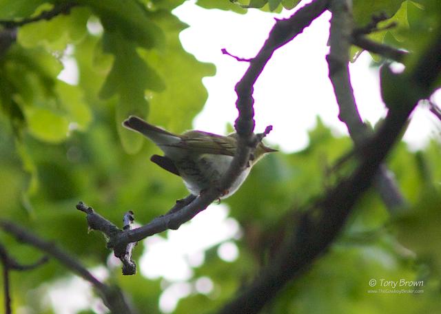 Spring, Male, Singing