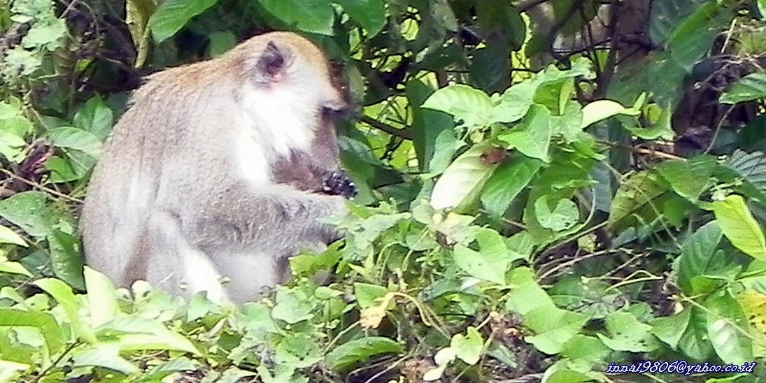 Gambar Monyet Lengkap dan Lucu