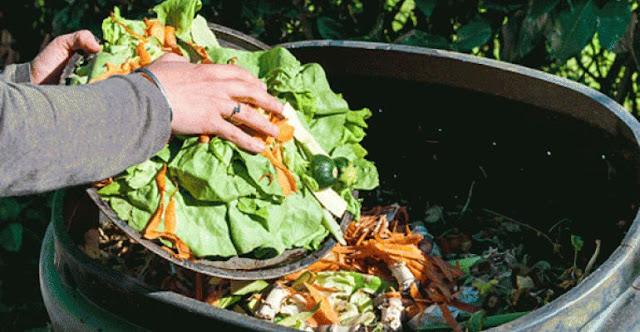 Beragam Olahan Limbah Organik, Sangat Bermanfaat