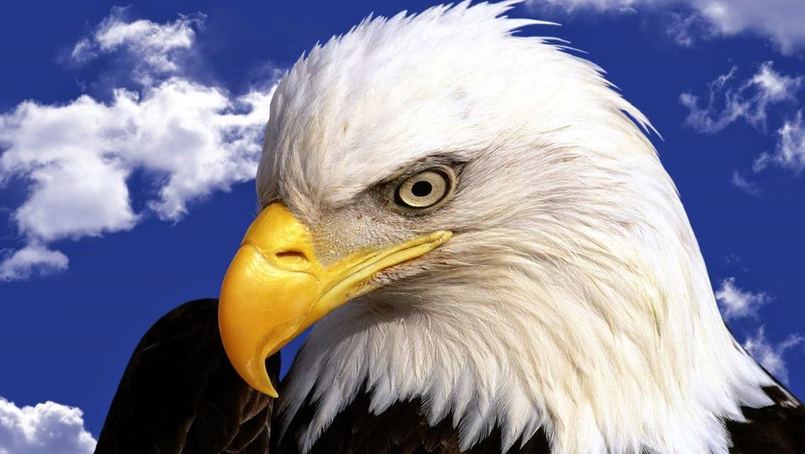 Are you an Eagle? : THE COMPREHENSIVE WILLIAM BRANHAM