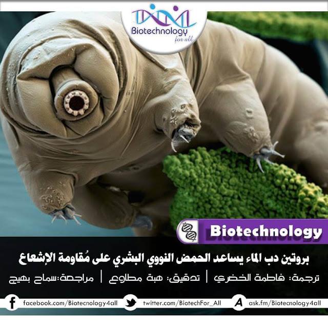 بروتين دبّ الماء يُساعد الحمض النووي البشري على مقاومة الإشعاع
