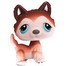 Littlest Pet Shop Small Playset Husky (#68) Pet