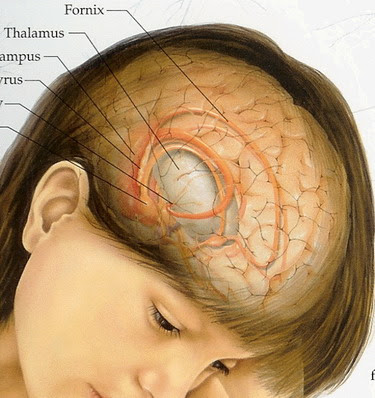 what are the symptoms of brain tumor or cancer