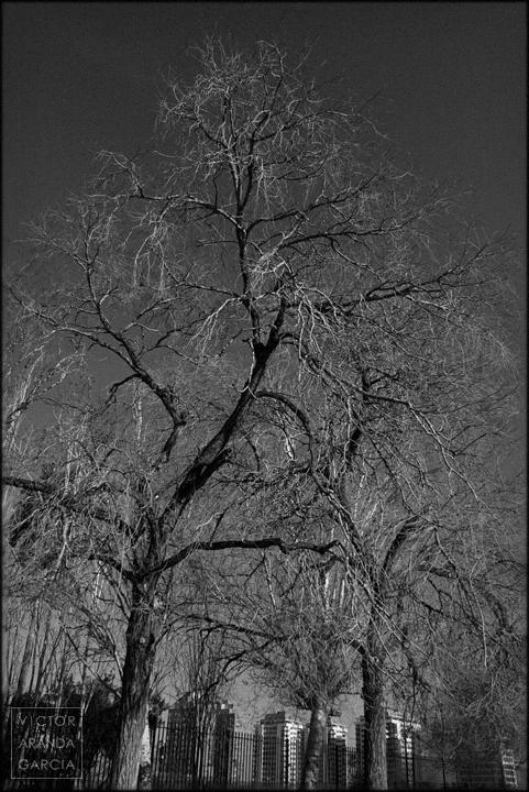 fotografía, naturaleza, Valencia, árboles, ramas, invierno