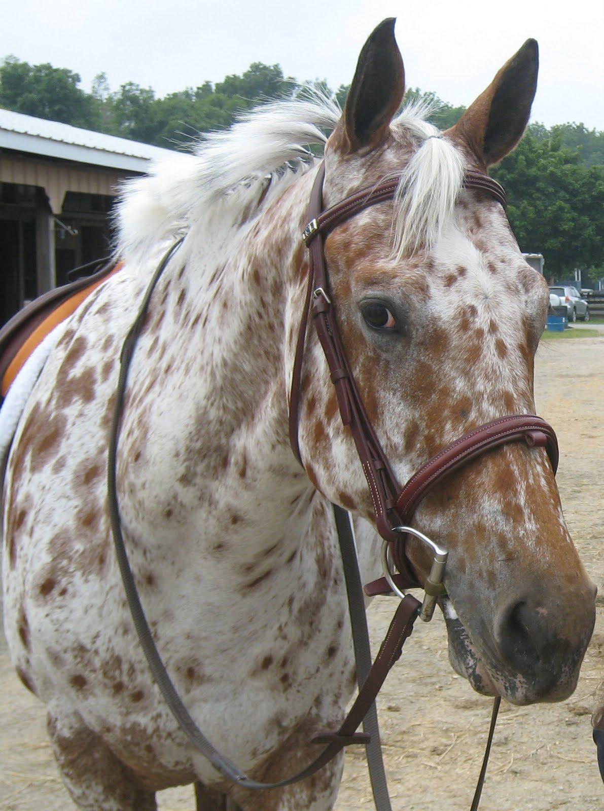 Friesian Horse Wallpapers - Wallpaper Cave  |Friesian Horses Running