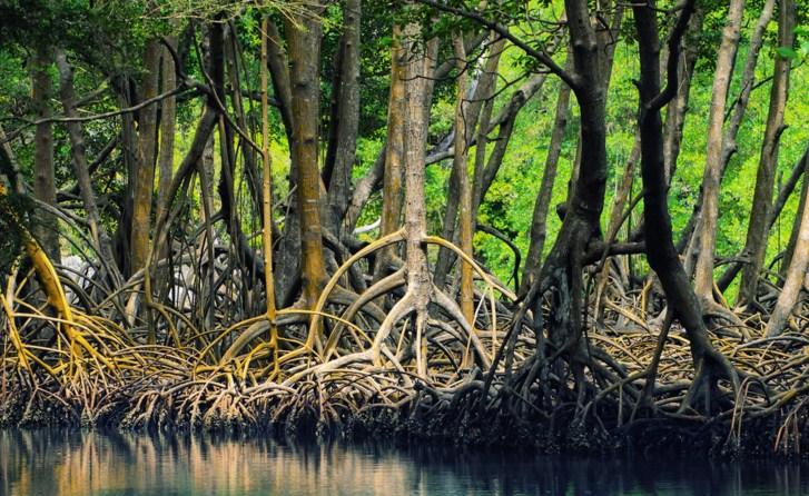 Elvidewiminawati Contoh Artikel Bahasa Indonesia Tentang Lingkungan