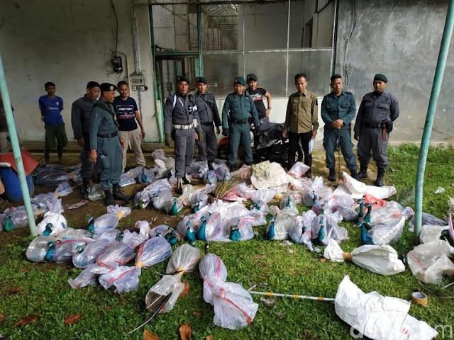 Astagfirullah... KLHK Gerebek Vila di Bogor, Temuannya Bikin Geleng-Geleng Kepala