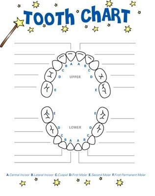 tooth-chart Teeth Diagram on teeth clip art, teeth whitening, teeth labeled, cleft palate, alveolar process of maxilla, teeth goals, teeth classification chart, teeth plaque build up on, teeth quadrants, teeth and gums, teeth printable, teeth model, tooth eruption, teeth x-ray, curve of spee, teeth nerves, teeth form, oral mucosa, teeth anatomy, teeth outline, teeth layout, teeth number, teeth surfaces chart, teeth smile,