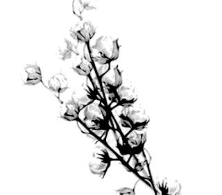 naturalna bawełna