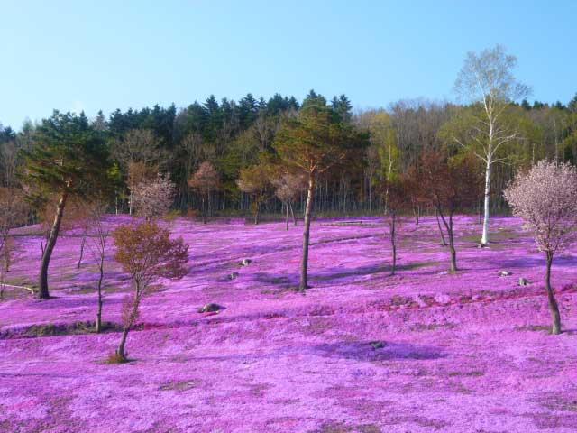 Resultado de imagen para Takinoue, el pueblo rosado