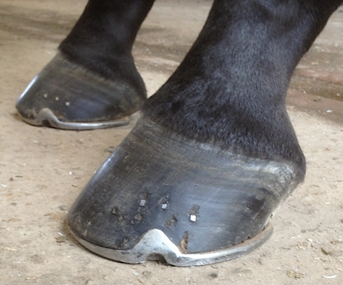 front feet of best shod horse at Burghley Horse Trials
