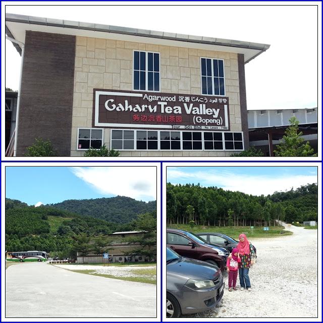 Gaharu Tea Valley | Teh Gaharu (Gopeng)|Tempat Menarik di Perak
