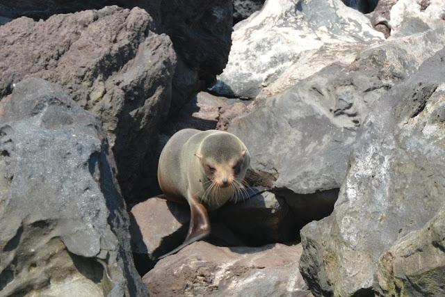 Punta Vicente Roca seal