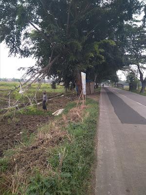 Pohon Rindang, di Jalur Telagasari - Majalaya Membahayakan Pengguna Jalan
