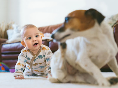 Adolescent Dog Snapped At Baby