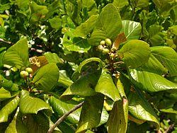 jati-pasir,www.healthnote25.com