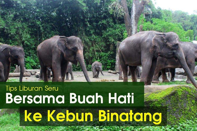 Tips Liburan Seru Bersama Buah Hati ke Kebun Binatang