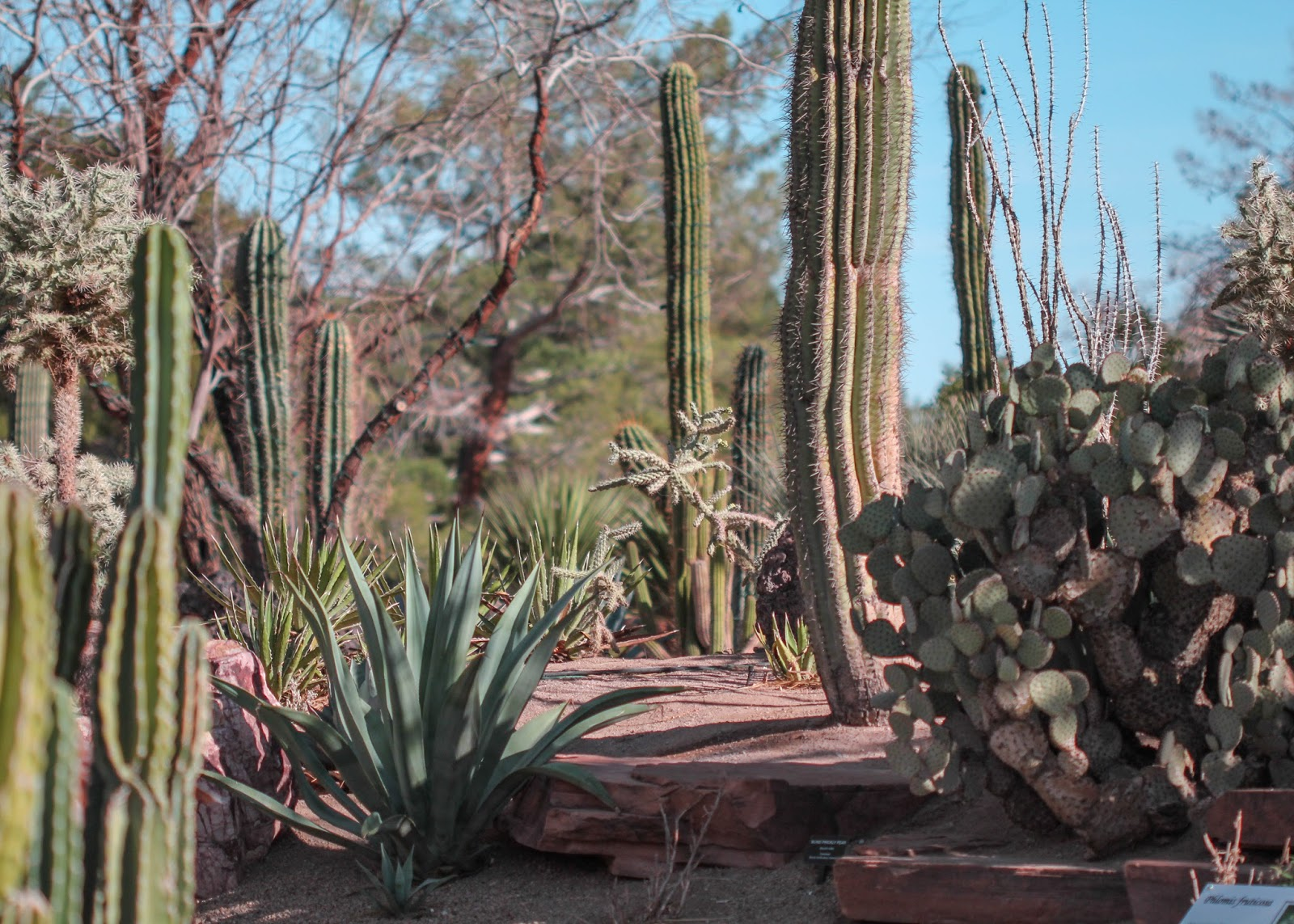 Red House Garden: The Ethel M. Chocolate Factory's Botanical ...