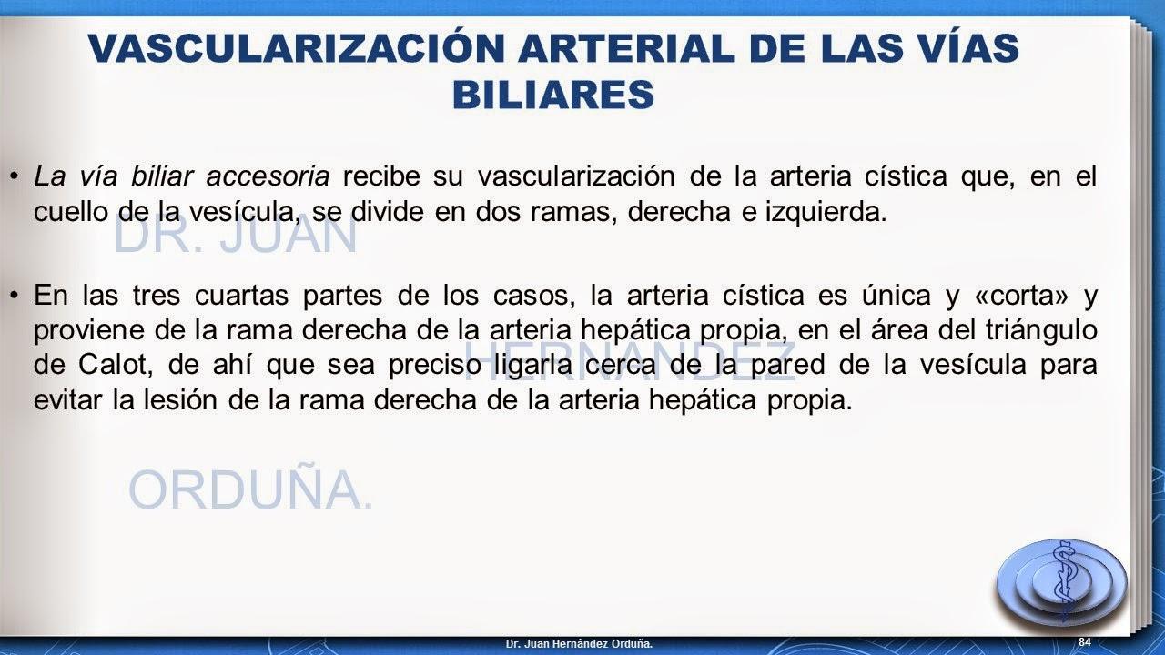 DR. JUAN HERNÁNDEZ ORDUÑA. : Anatomía quirurgica de vias biliares ...