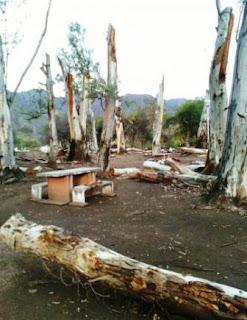 Es en La Majadita. Más de 10 eucaliptos fueron gravemente dañados. Para Ambiente, hubo 'impericia'. Harán una reforestación.