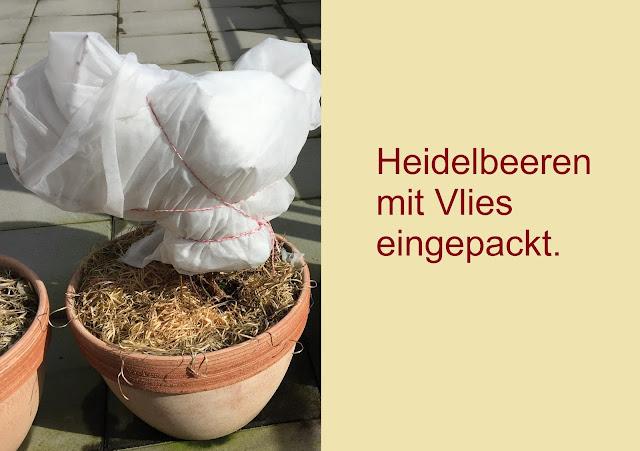 Heidelbeer mit Wintervlies