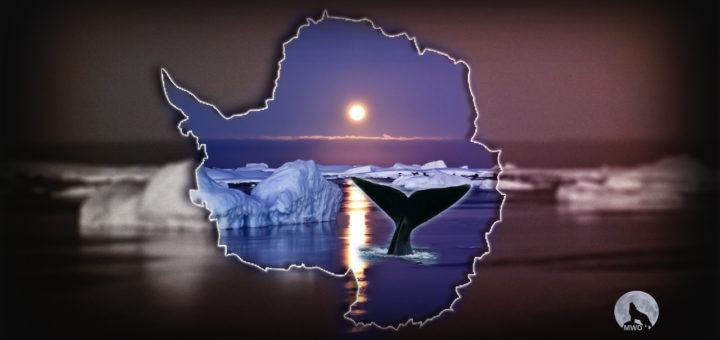 A Antártica não é o que eles tem dito para nós | Mas o que é isso?