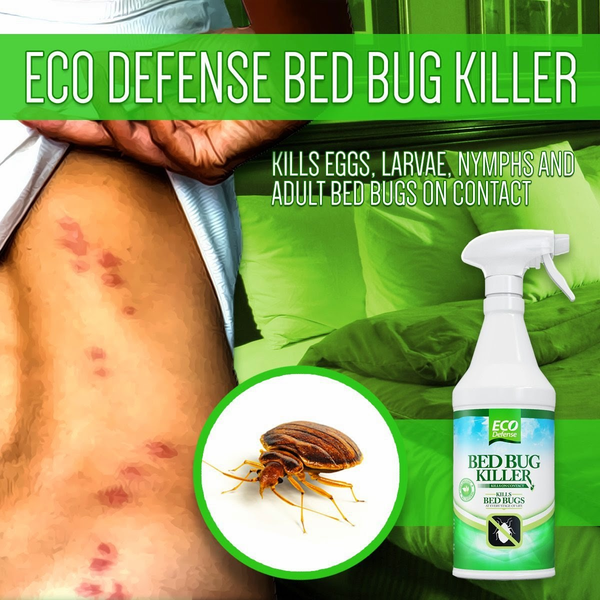 Spray To Kill Bed Bugs Popular Product Reviews By Amy Bed Bug Killer By Eco Defense Review