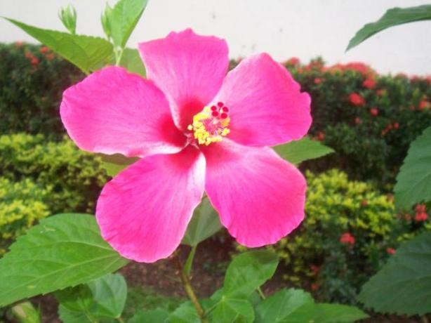 purple hibiscus english essay coming of The aim of this is to examine how adichie's purple hibiscus is typical of how the   nnolim's essay also forms an important intervention on the possible translation  of a  related to kambili's coming to self-knowledge is the issue of space and.