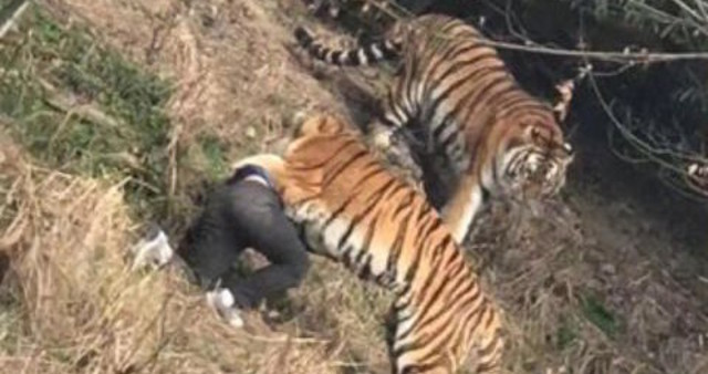 Padah panjat pagar elak bayar tiket zoo, lelaki ini maut diserang harimau
