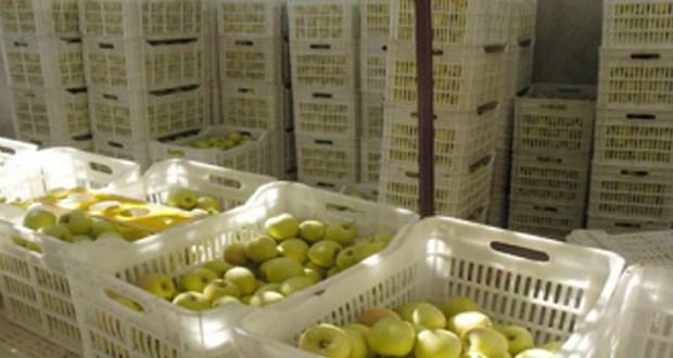 توزيع 90 ألف صندوق على مزارعي السويداء لتسويق محصول التفاح