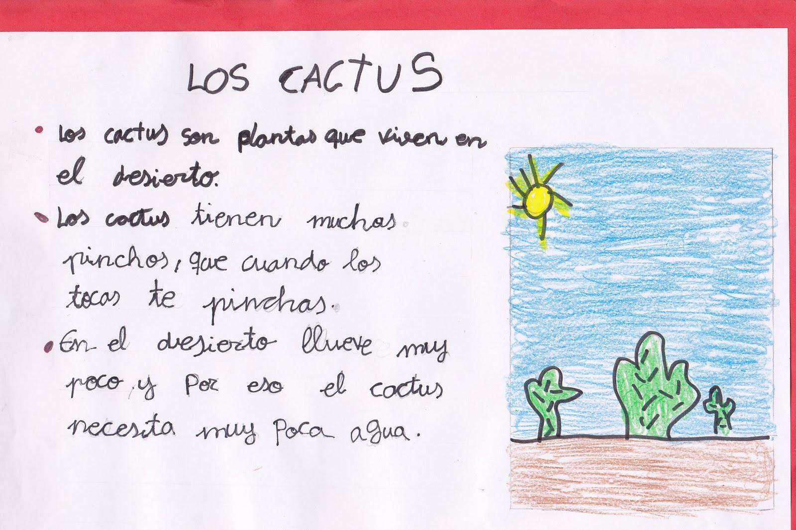 Ceip El Zargal Primero B Los Cactus Sonia