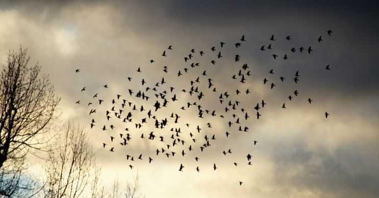 Kuş sürüsü gökyüzünde bir bulut oluşturabilir, tabii bunun için çok fazla kuşun bir araya gelmesi gerekir.