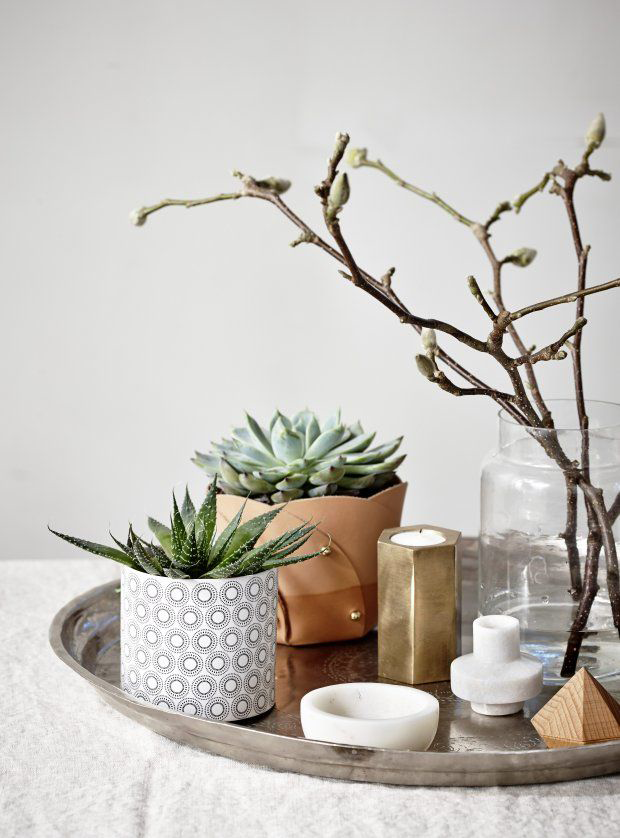 | Decorating with succulents - Decoration