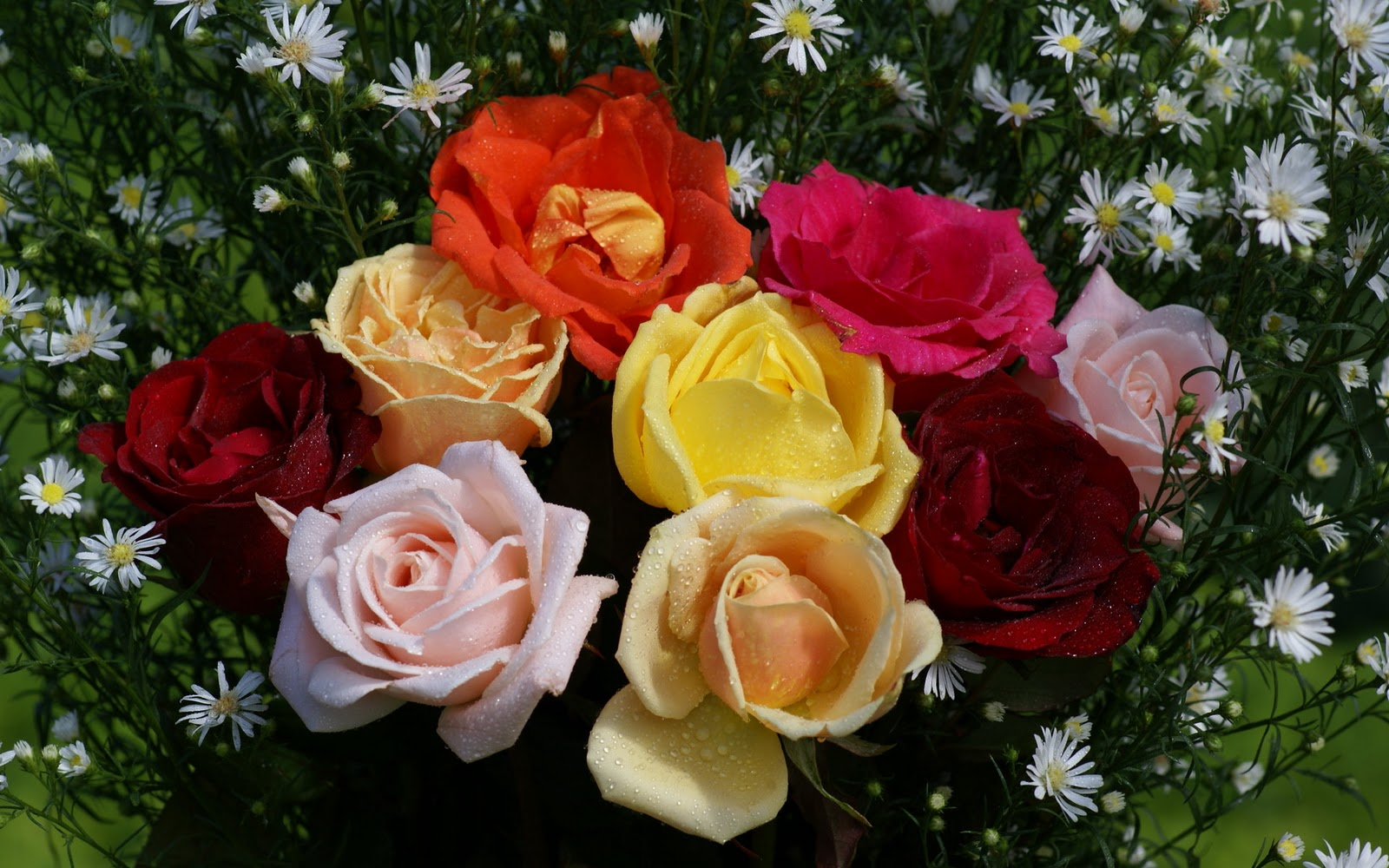 Beautiful roses wallpapers rose wallpapers - Beautiful rose wallpaper ...