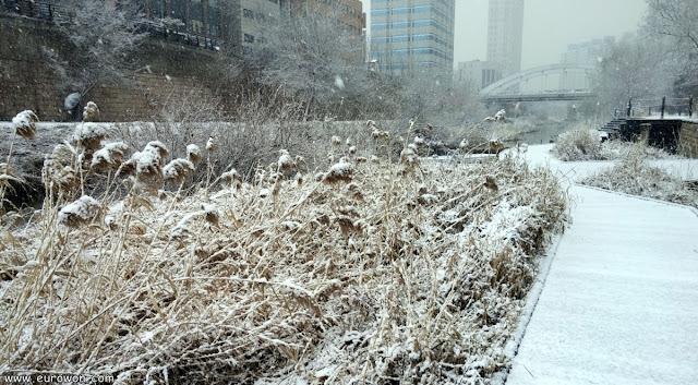 Vegetación nevada en el arroyo Cheonggycheon de Corea del Sur