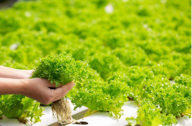 Ketahanan Pangan Dan Urban Farming